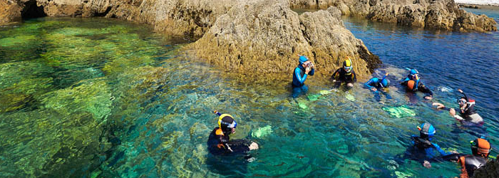 Balade palmée le long des côtes à Camaret-sur-Mer