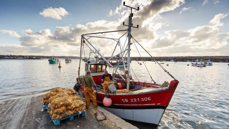 La pêche à la Coquille Saint-Jacques à Erquy