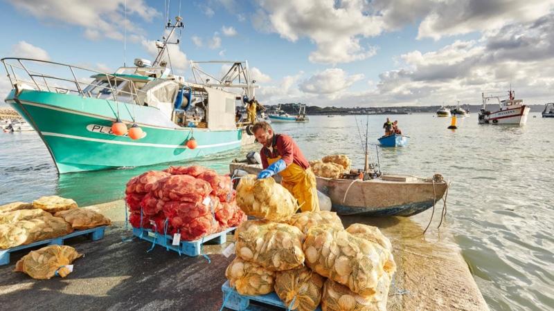 Les pêcheurs à la coquille Saint-Jacques sur le port d'Erquy