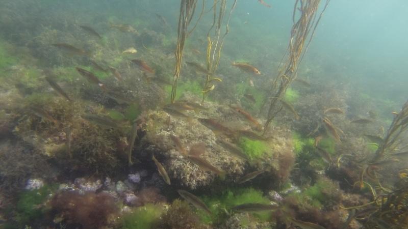 Sous l'eau à l'Anse de Rospico - Névez Port Manec'h