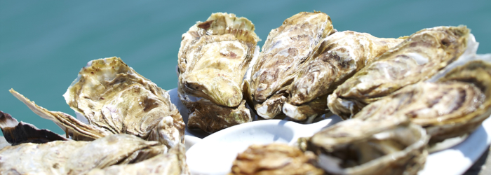 Une dégustation d'huitres au Bar à huîtres de la Maison Bouchonneau