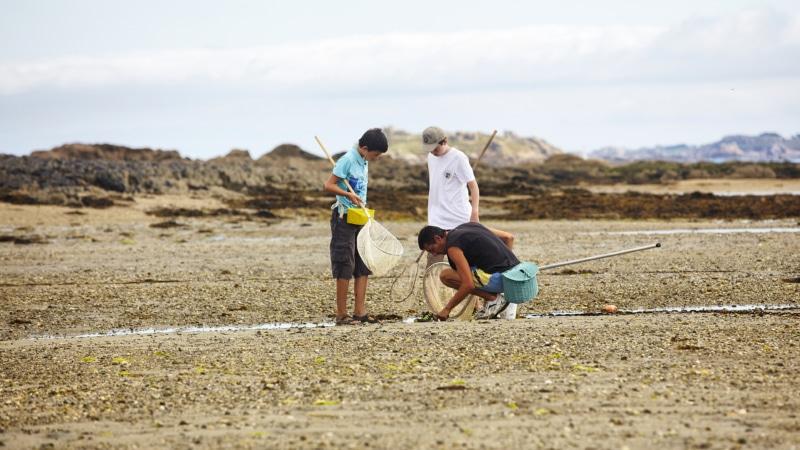Pêche à pied sur l'estran à Callot à Carantec