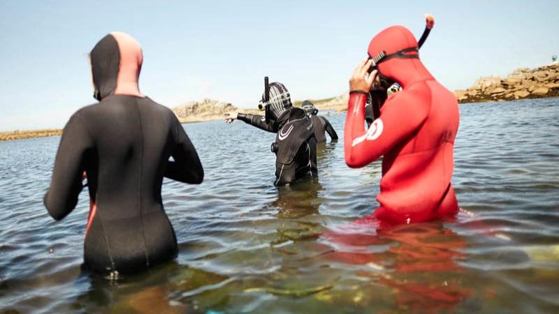 Snorkeling ou balade à la palme à Plougasnou