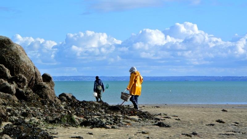 Binic- Étables-sur-mer et son estran