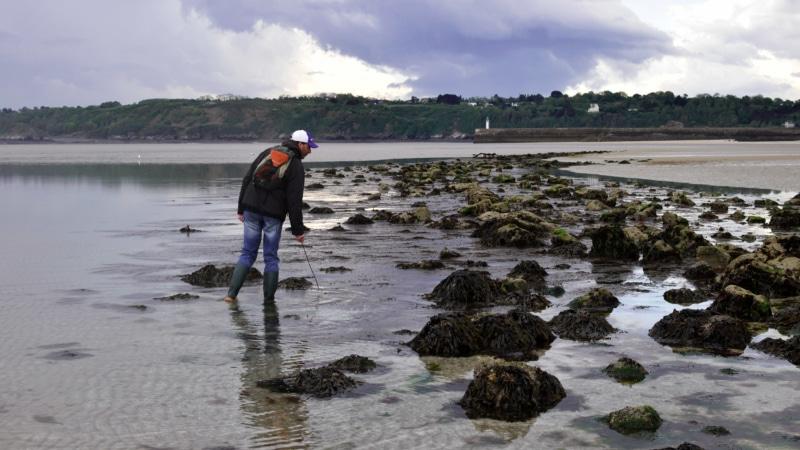 Pêche à pied sur l'estran à Binic- Étables-sur-mer