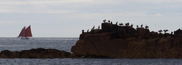 Découverte des Sept-Iles et sa réserve ornithologique