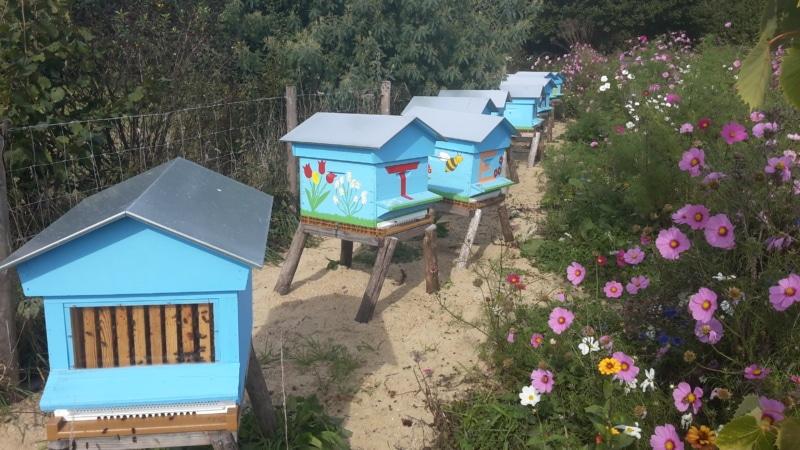 Les ruches de Terr'Aven à Névez Port Manec'h