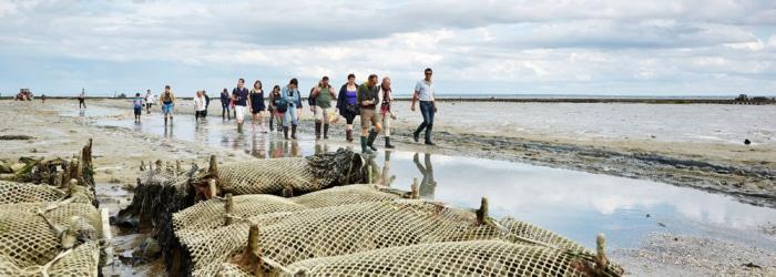 Visiter les parcs à huîtres à Cancale