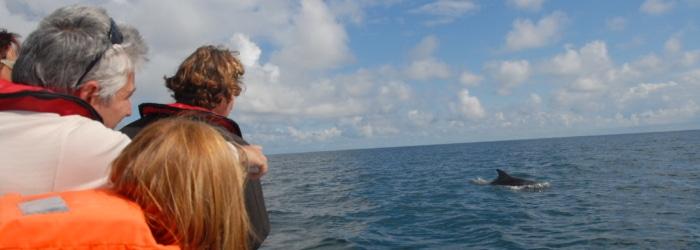 Faire une balade en bateau en Baie du Mont Saint Michel pour voir les dauphins