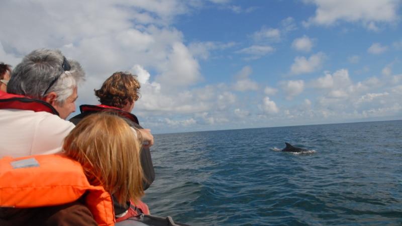 Rencontrer les dauphins à Cancale !