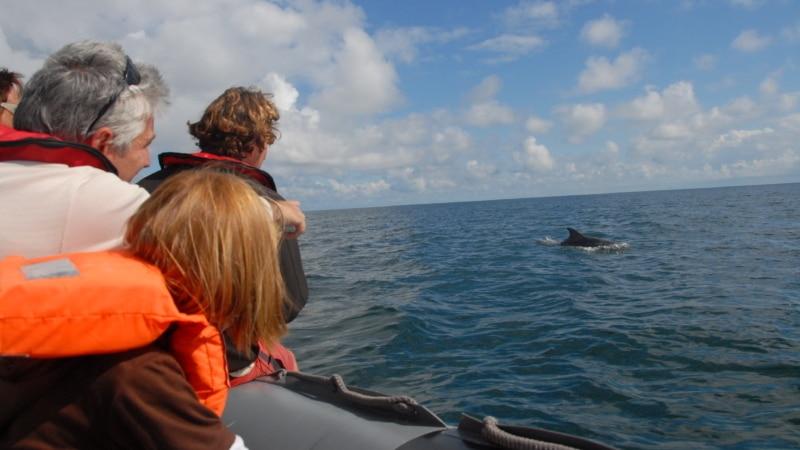 Dauphins au large de Cancale