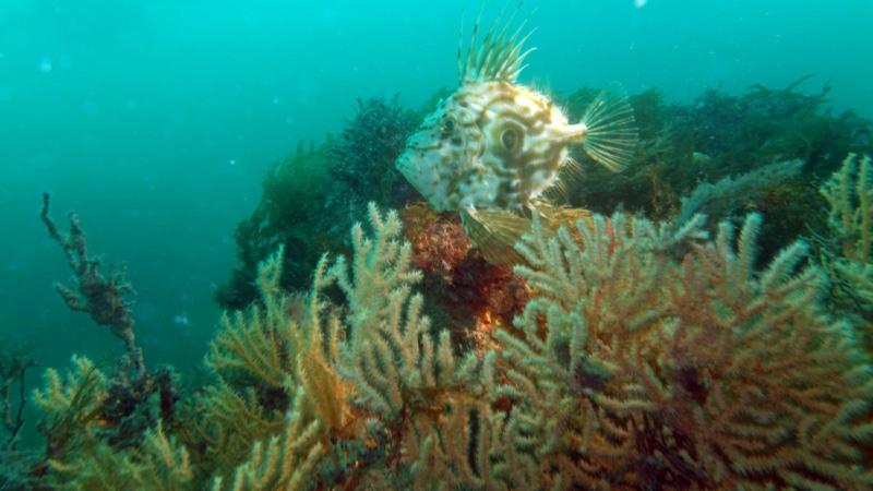 Immersion sous les eaux à Saint-Quay-Portrieux