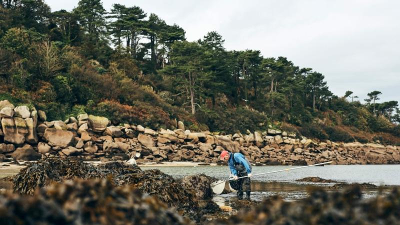 Pêche à pied sur l'île Millau