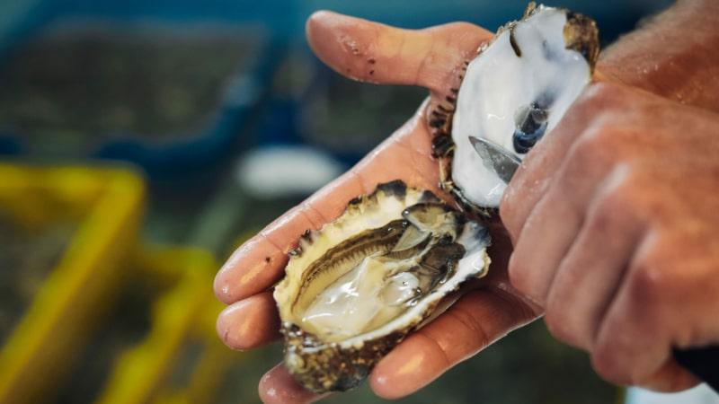 Dégustation d'huîtres à Trébeurden