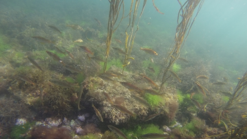 Snorkeling - Anse de Rospico - Névez-Port Manec'h